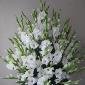 Canasta con gladiolas blancas