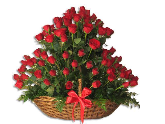 espectacular 75 rosas rojas - Fotos De Rosas Rojas Grandes